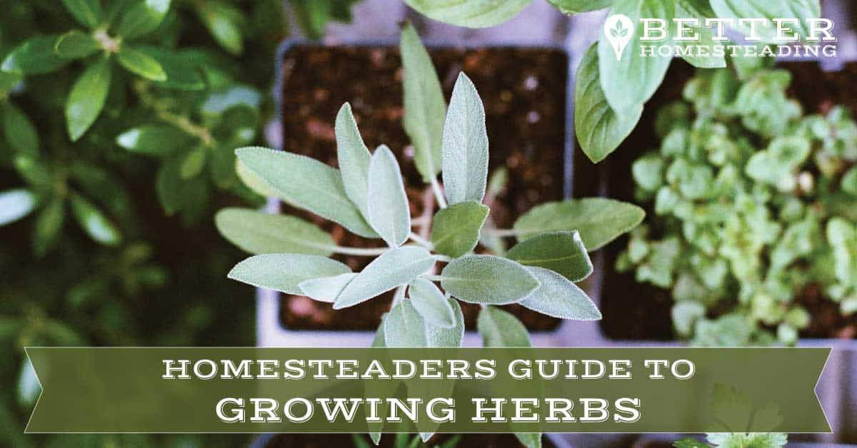 herb garden ideas