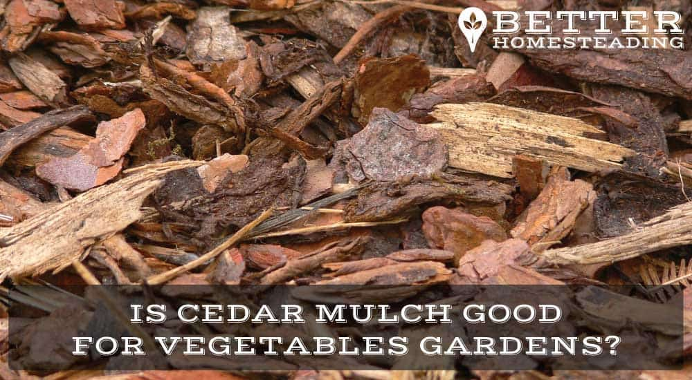 cedar mulch for vegetable garden