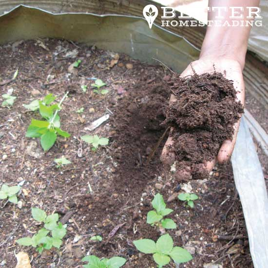 compost for the homestead garden