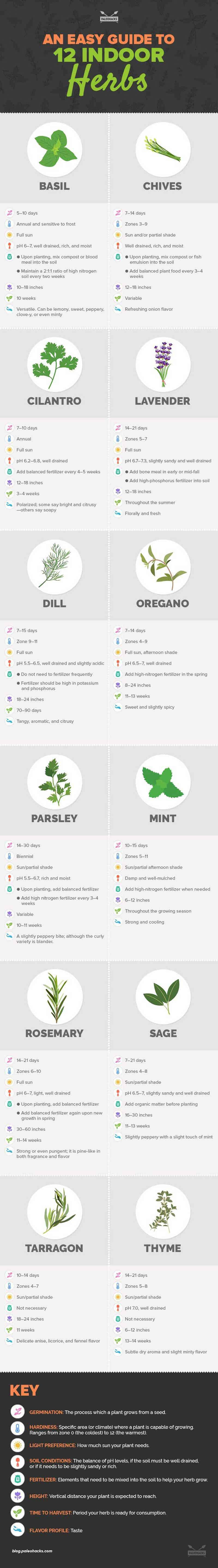 easy guide to grow your own herbs