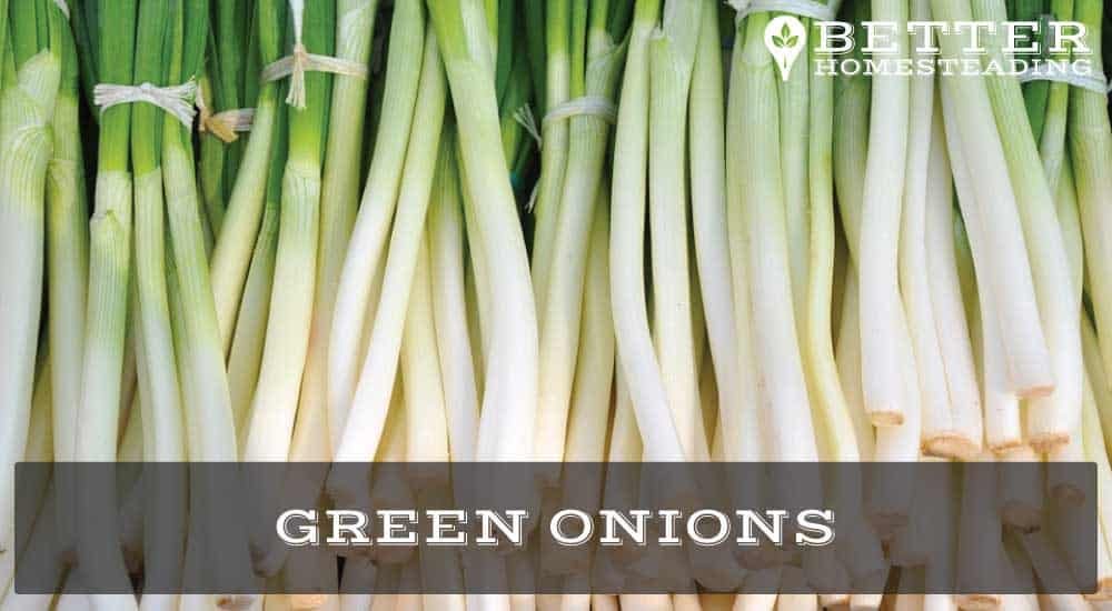 Growing Onions From Scraps