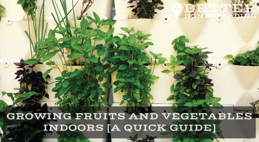 growing fruits and vegetables indoors