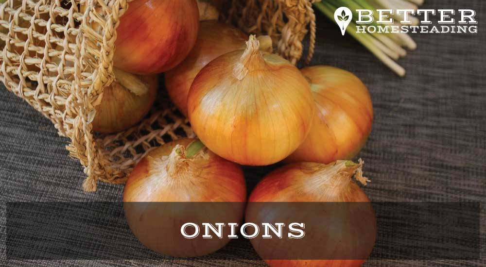 Growing Onions From Roots