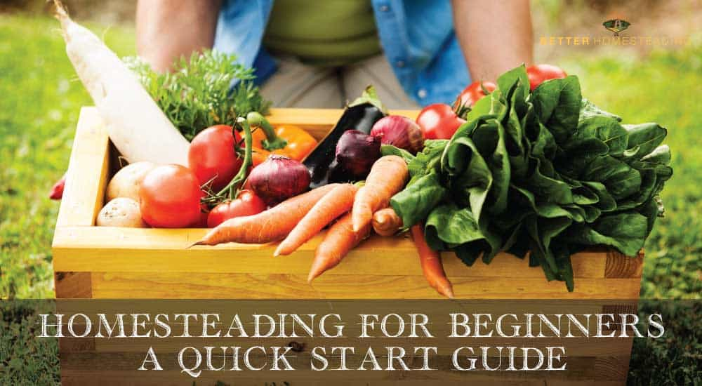 A Beginners Guide To Homesteading For Beginners