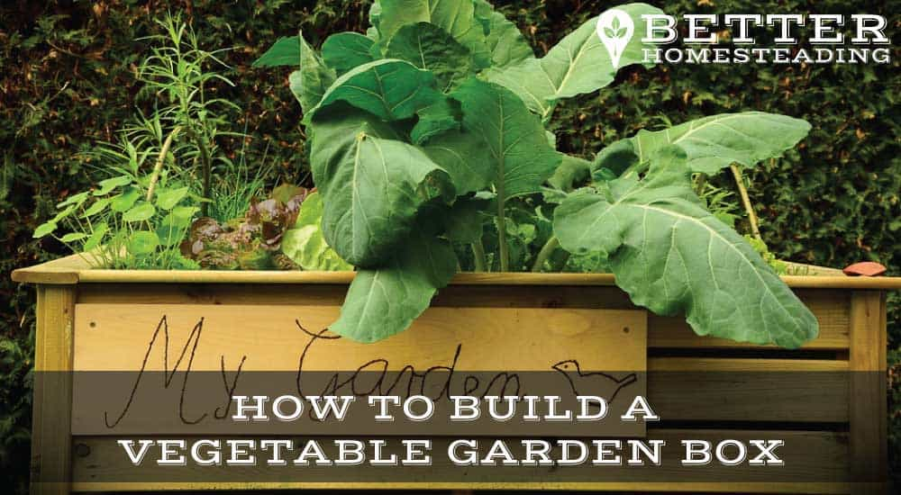 How To Build A Vegetable Garden Box With Video Better Homesteading