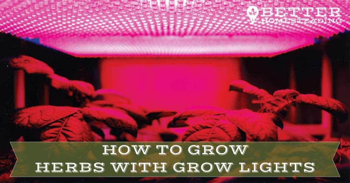 how to grow herbs with grow lights