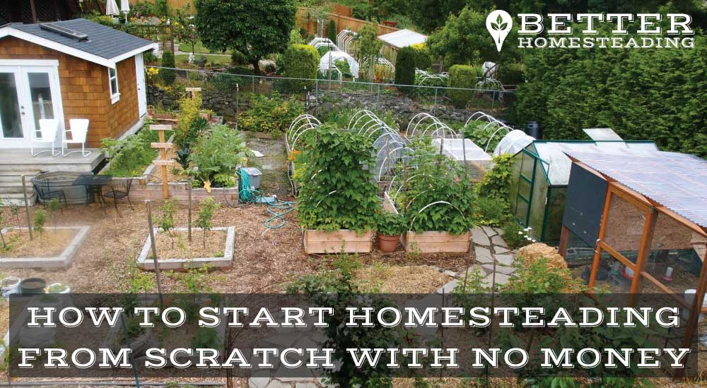 how to start homesteading from scratch with no money