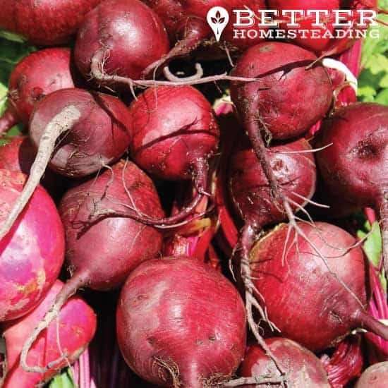 raw beets for fermenting