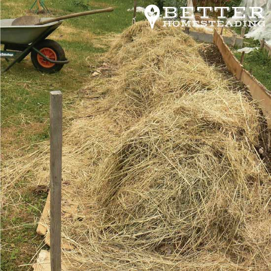 sheet mulched homestead garden bed