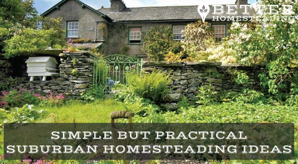 suburban homesteading ideas