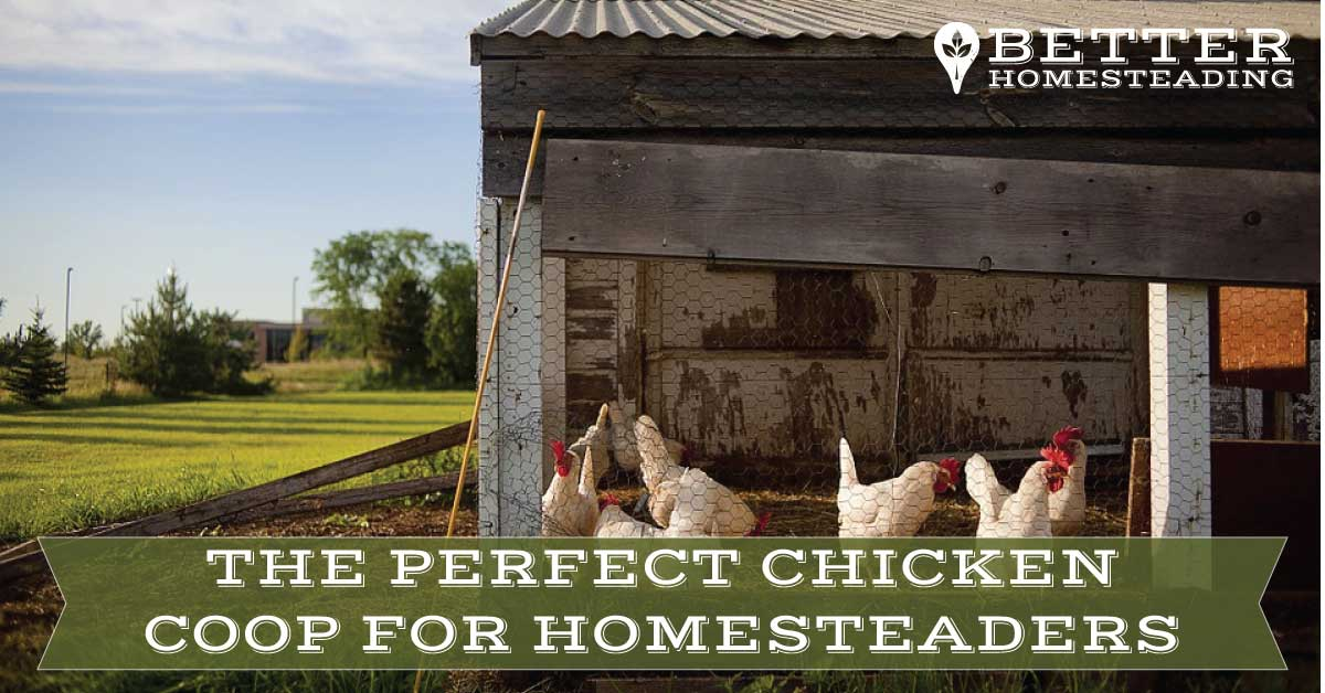 the perfect chicken coop for homesteaders
