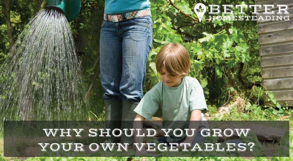 why should you grow your own vegetables
