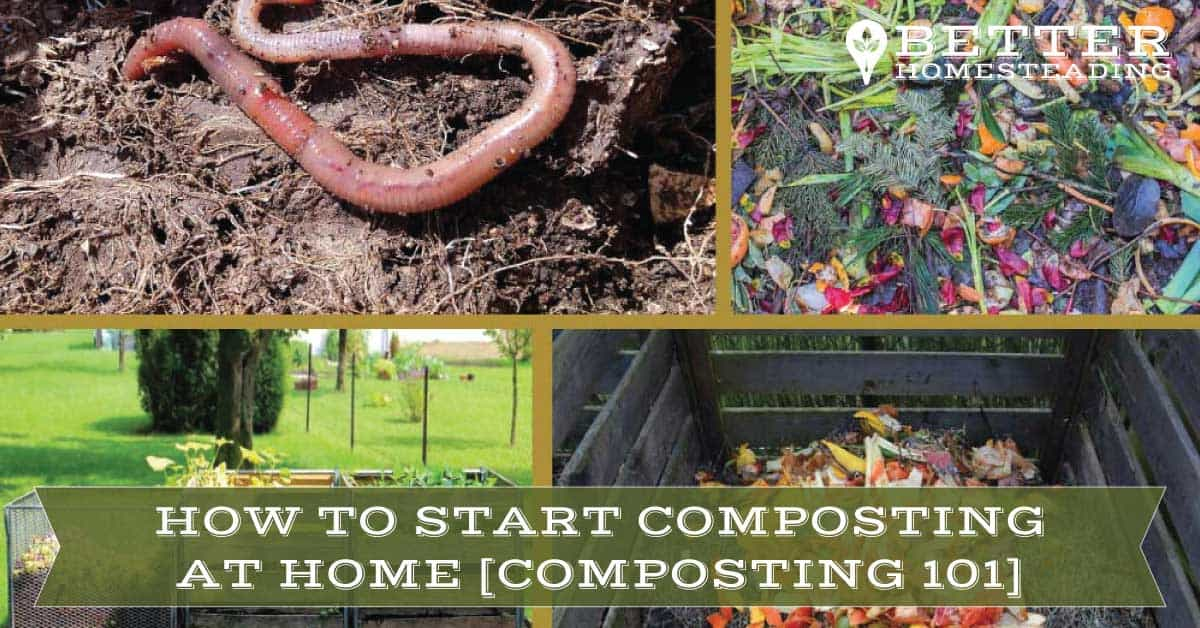 Making Organic Compost At Home Composting 101 Guide