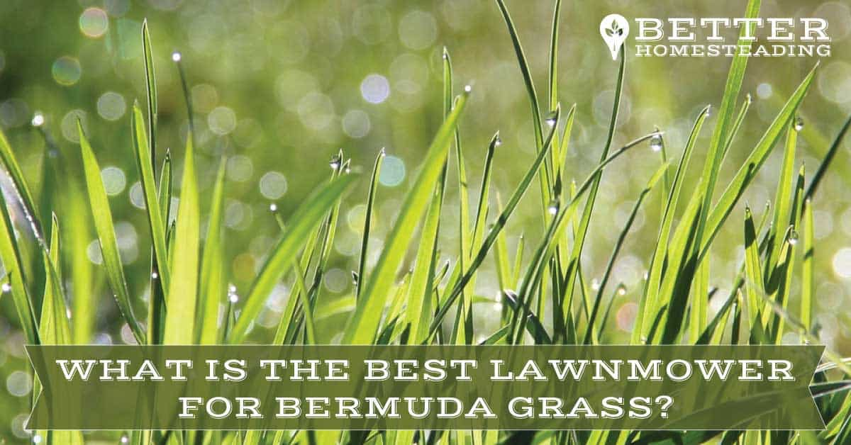 best lawn mower for bermuda grass