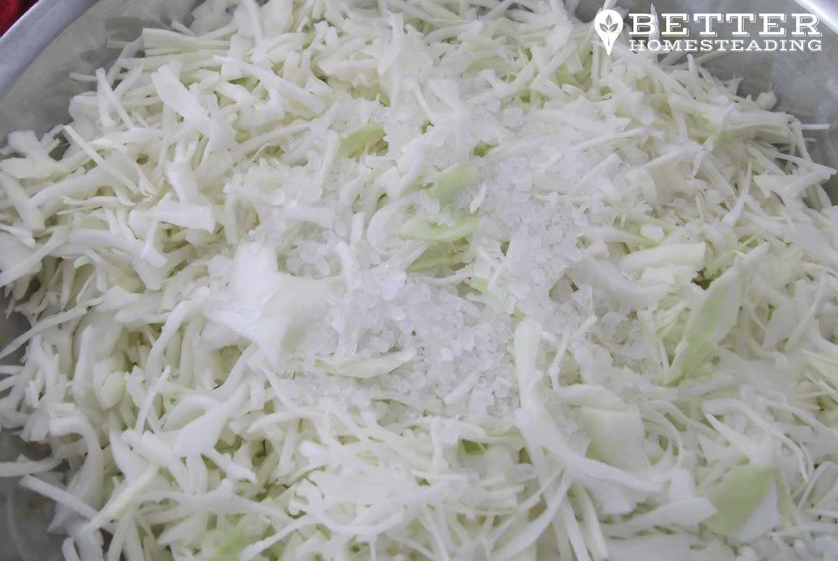 Cabbage shredded and salted