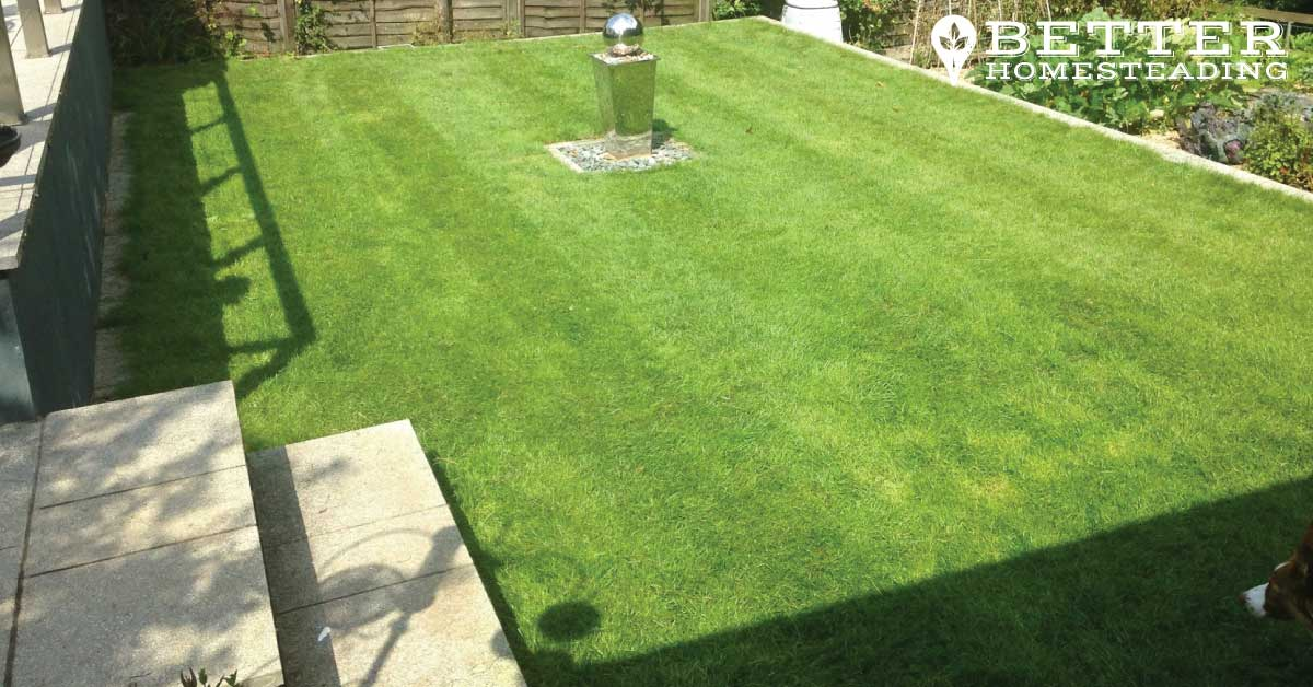 Striped lawn after mowing with the push mower