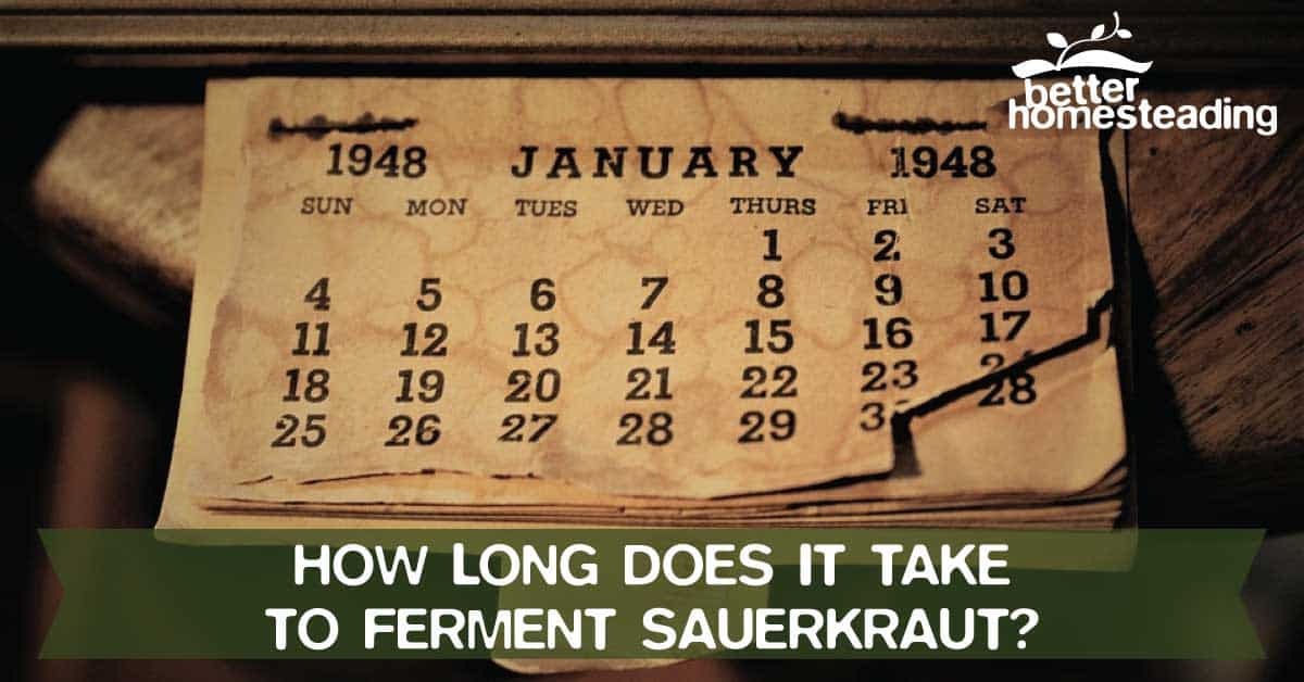How long to ferment sauerkraut calendar