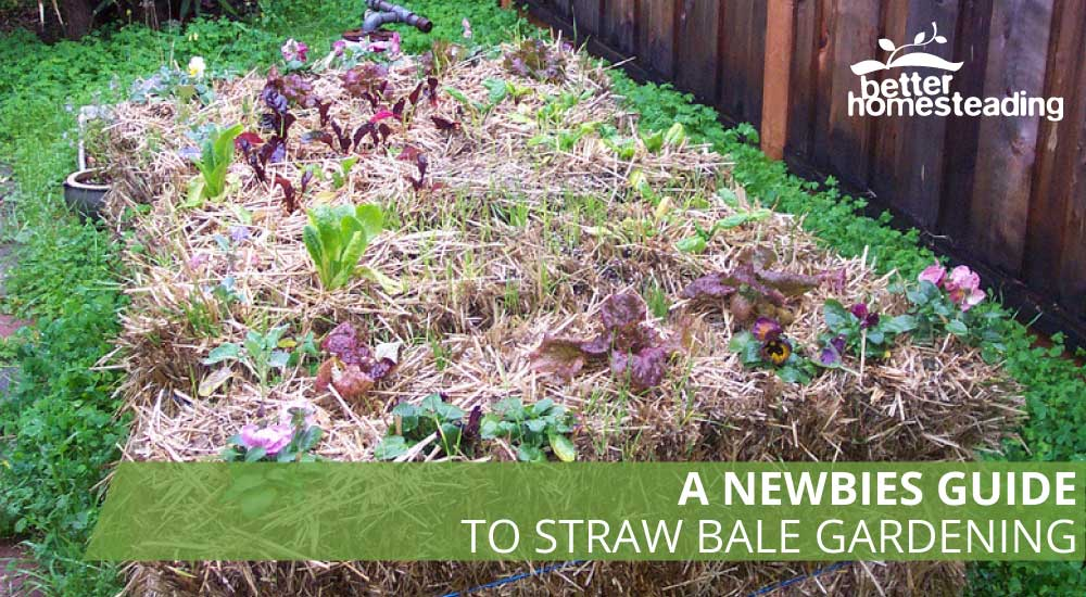 Straw And Hay Bales For Gardening – Instructions To Get ... on vegetable garden fence ideas, raised garden on hill, vegetable garden trellis ideas, raised garden fence design, raised garden with fountain, best vegetable container ideas, raised garden wall ideas, raised vegetable beds, small garden ideas, vegetables in flower garden ideas, raised vegetable gardens for beginners, landscape design ideas, raised container gardens ideas, flower bed design ideas, cute vegetable garden ideas, garden beds on sloped backyards ideas, landscape vegetable ideas, raised garden planter boxes ideas, raised veggie garden ideas, cool fall garden ideas,